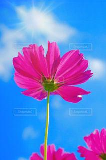 近くの花のアップの写真・画像素材[1527679]