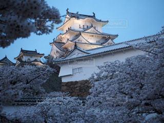 桜と姫路城の写真・画像素材[1105090]