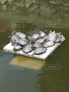 水中を泳ぐ動物の写真・画像素材[1153768]