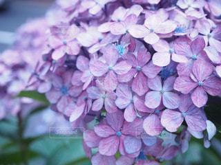近くの花のアップの写真・画像素材[1115931]