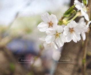 近くの花のアップの写真・画像素材[1116442]