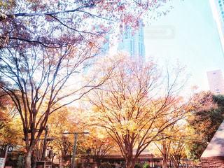 近くの木のアップの写真・画像素材[1117442]