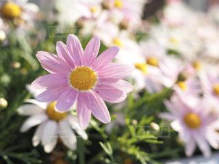 近くの花のアップの写真・画像素材[1140966]