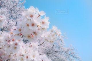 近くの花のアップの写真・画像素材[1722120]