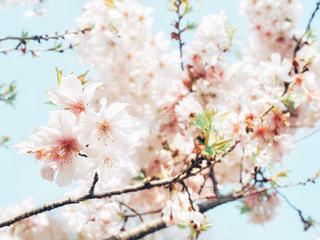 近くの花のアップの写真・画像素材[1826365]