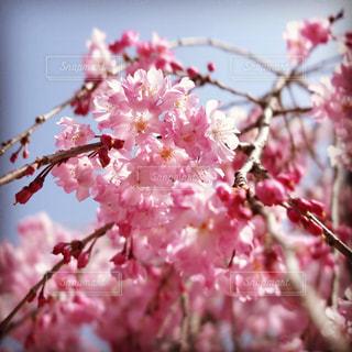 近くの花のアップの写真・画像素材[1105349]