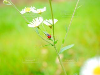 近くの花のアップの写真・画像素材[1105434]