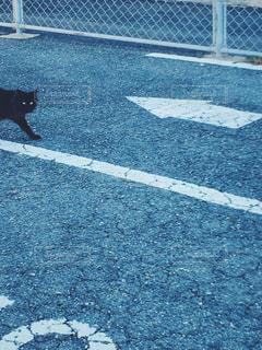 近くの道路を歩く犬のアップの写真・画像素材[1106242]