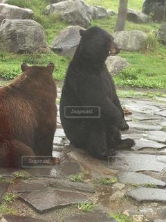 ほっこりクマさんの写真・画像素材[1109298]
