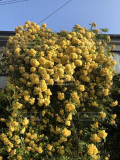 近くの花のアップの写真・画像素材[1137358]