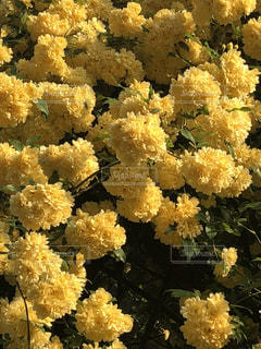 近くの花のアップの写真・画像素材[1137359]