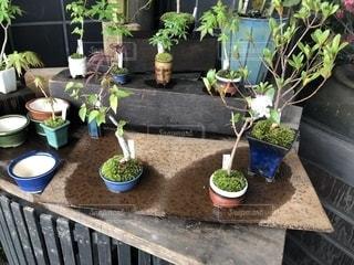 鍋に植物の写真・画像素材[1137361]