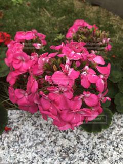 近くの花のアップの写真・画像素材[1153430]