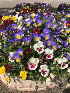 紫色の花一杯の花瓶の写真・画像素材[1159195]
