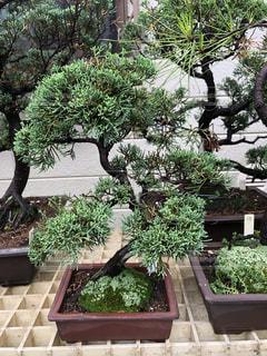 庭園の緑の植物の写真・画像素材[1229853]