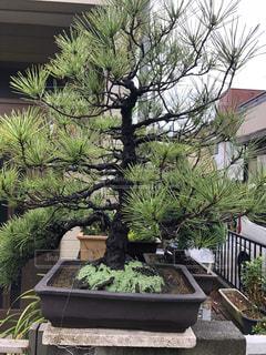 庭園の緑の植物の写真・画像素材[1229856]