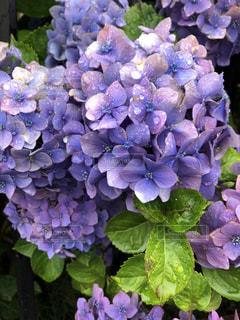 近くの花のアップの写真・画像素材[1274327]
