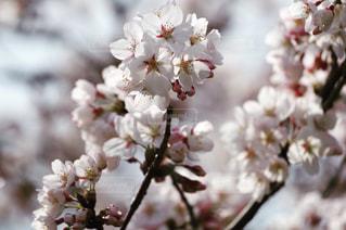 近くの花のアップの写真・画像素材[1106662]