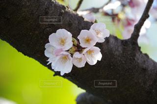 花のクローズアップの写真・画像素材[2377042]