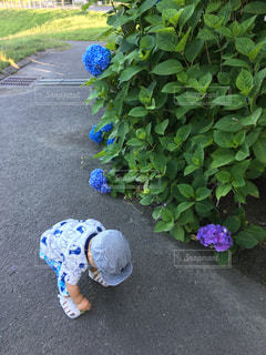 紫陽花と子供の写真・画像素材[1106853]