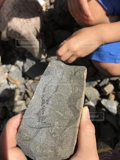 化石発掘か!?の写真・画像素材[1121291]