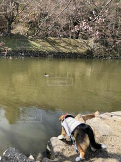 獲物を狙う犬 - No.1106979
