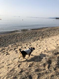 湖畔を歩く犬の写真・画像素材[1106980]
