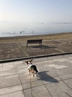犬 - No.1106982