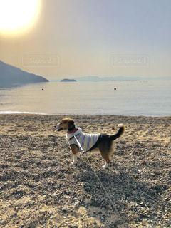ビーチでたそがれている犬 - No.1106983