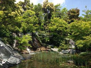 森の中の池 - No.1109113