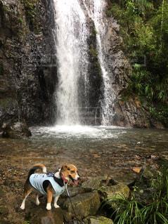 滝の隣に歩く犬 - No.1109127