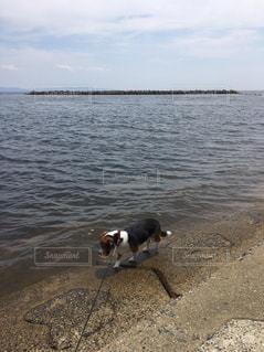 海岸の犬 - No.1109133