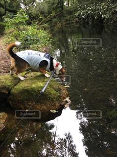 森を流れる川と犬 - No.1109144