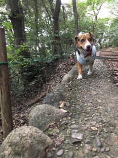 山道を散歩する犬 - No.1109145