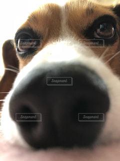犬 - No.1113629