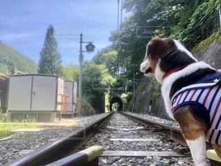 線路と犬の写真・画像素材[1278357]