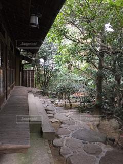 公園内の石の道の写真・画像素材[1107062]
