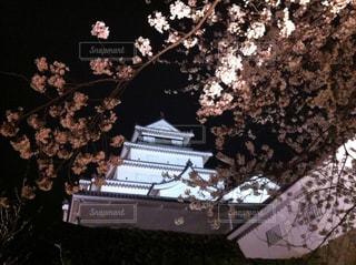 春の鶴ヶ城の写真・画像素材[1108784]
