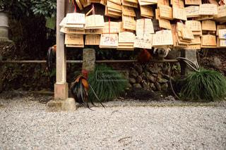 絵馬と鶏の写真・画像素材[1107194]