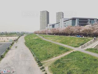 桜並木の写真・画像素材[1107377]