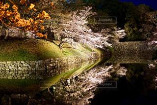 内堀に映る夜桜の写真・画像素材[1107363]