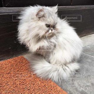白い面の上に座って猫 - No.1107491