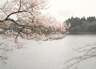 風景の写真・画像素材[1107601]