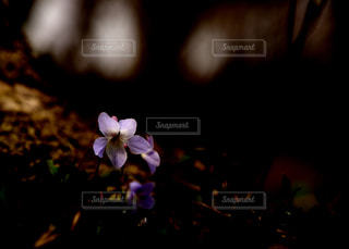近くの花のアップの写真・画像素材[1107602]