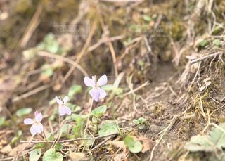 花の写真・画像素材[1107607]