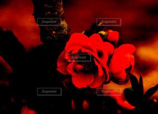 近くの花のアップの写真・画像素材[1107633]