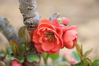 近くの花のアップ - No.1107634