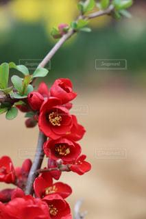 近くの花のアップ - No.1107637