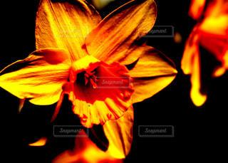 近くの花のアップの写真・画像素材[1107721]