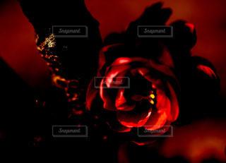 暗闇の中ライトアップ赤の写真・画像素材[1107727]